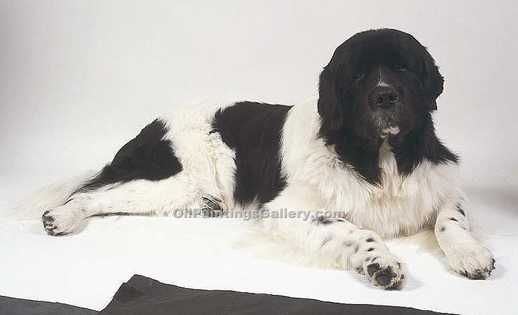 """A Black and White"" by  Sir Edwin Henry Landseer"