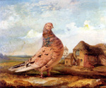 A Fancy Pigeon by  James Ward (Painting ID: AN-0907-KA)