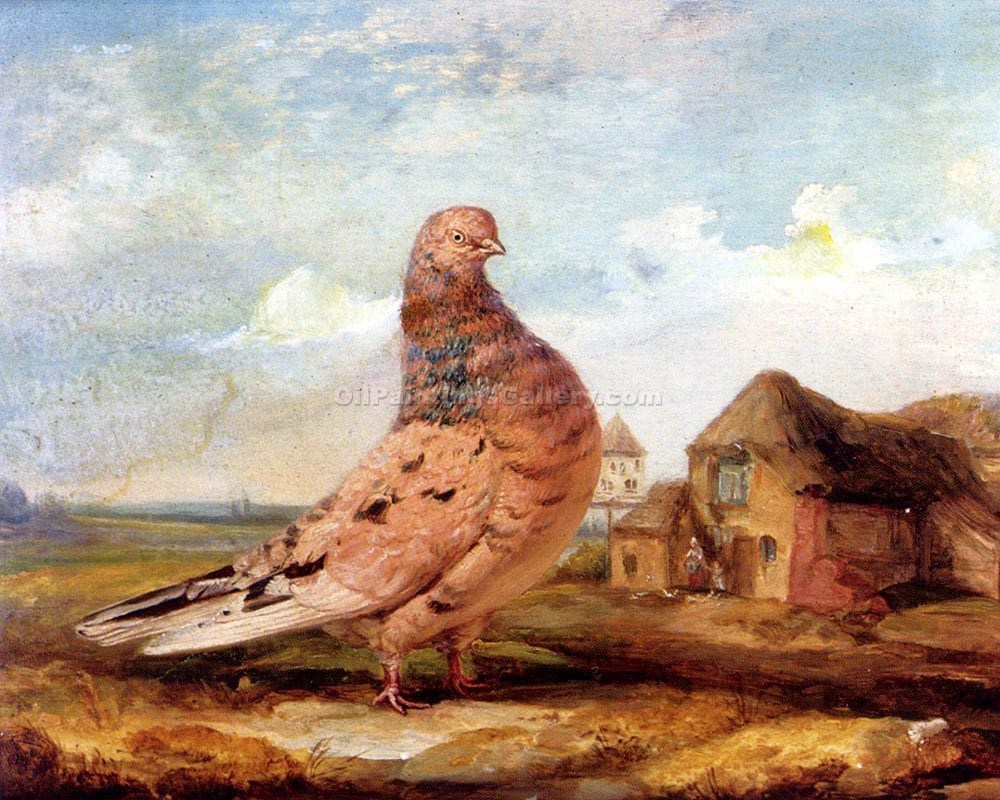 """A Fancy Pigeon"" by  James Ward"