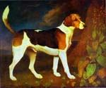 A Foxhound, Ringwod by  George Stubbs (Painting ID: AN-0383-KA)