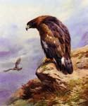 A Golden Eagle by  Archibald Thorburn (Painting ID: AN-0903-KA)