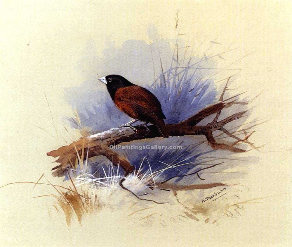"""A Nepalese Black Headed"" by  Archibald Thorburn"