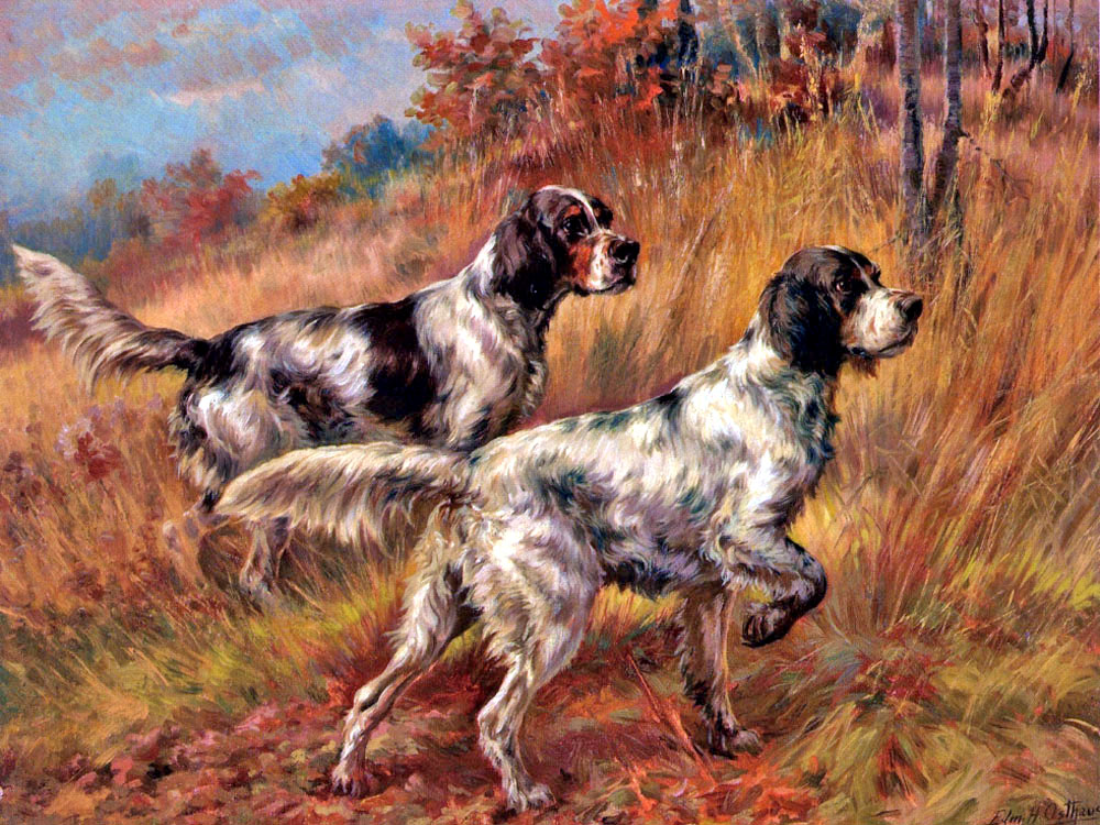 """American Llewelyn Setters on Point"" by  Edmund H. Osthaus"