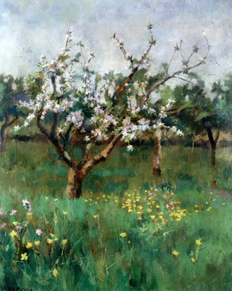 """Apple Blossom"" by  Harold Harvey"