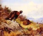 Cock Grouse 63 by  Archibald Thorburn (Painting ID: AN-0963-KA)