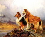 Collies by  England 1891 to 1941 Barker Wright (Painting ID: AN-0427-KA)