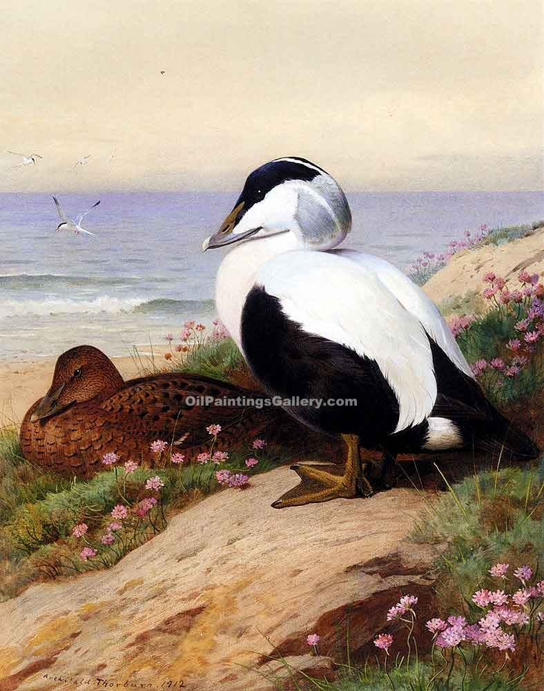 """Common Eider Ducks"" by  Archibald Thorburn"