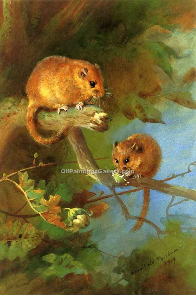 """Dormice"" by  Archibald Thorburn"