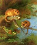 Dormice by  Archibald Thorburn (Painting ID: AN-0995-KA)