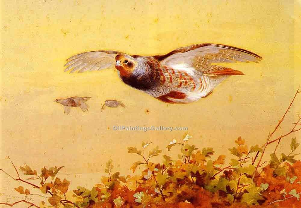 """English Partridge in Flight"" by  Archibald Thorburn"