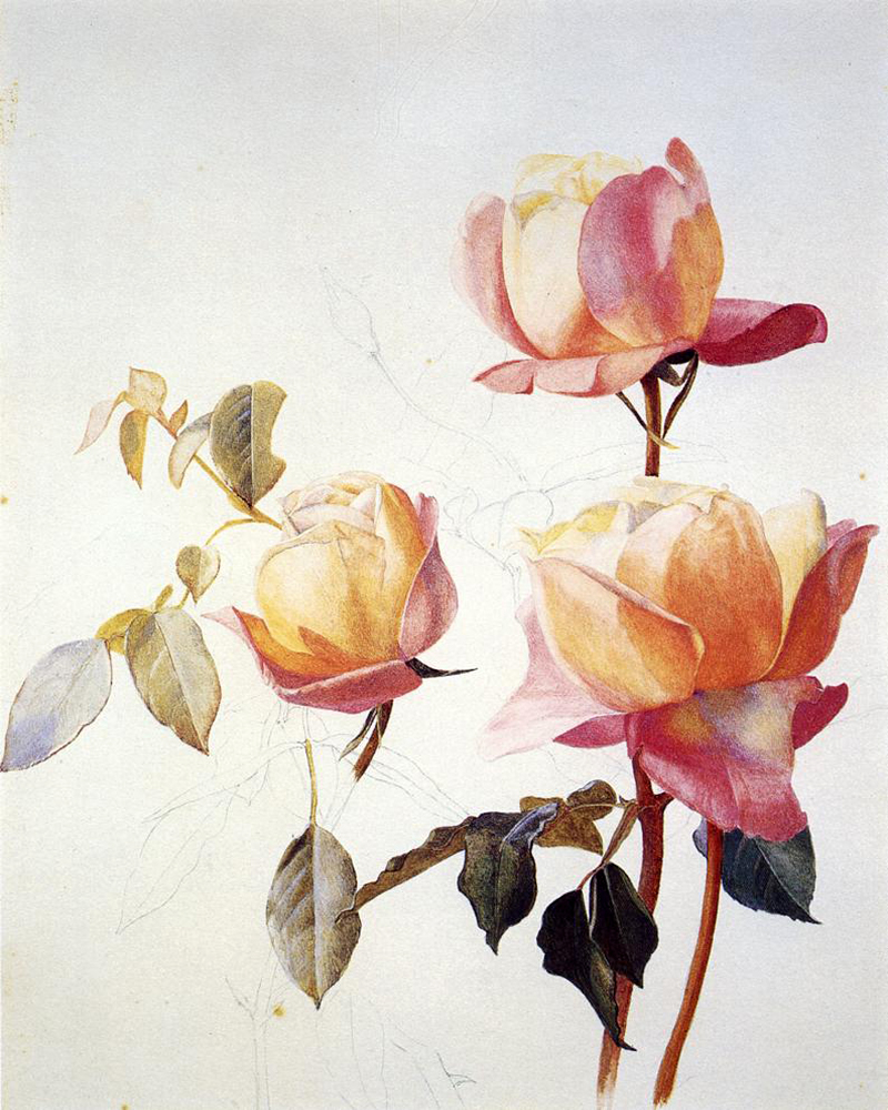 """Florentine Roses"" by  Henry Roderick Newman"