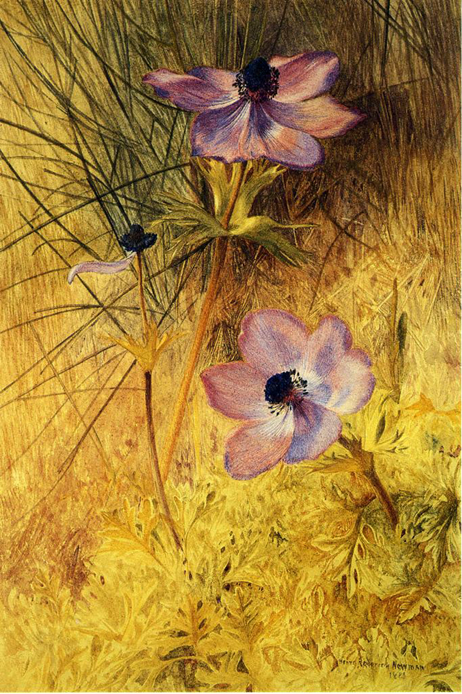 """Florentine Wild Anemones"" by  Henry Roderick Newman"