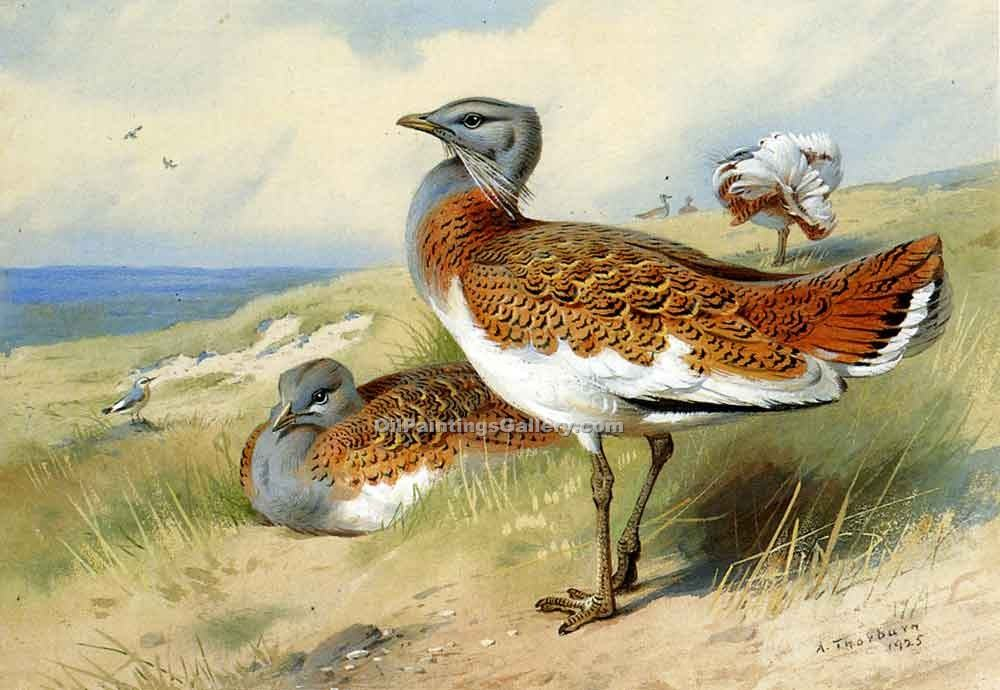 """Great Bustards"" by  Archibald Thorburn"