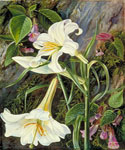 Great Lily by  Marianne North (Painting ID: LA-3250-KA)
