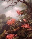 Hummingbird and Passionflowers by  Martin Johnson Heade (Painting ID: AN-0834-KA)