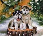 Huskies   (Painting ID: AN-0387-A)