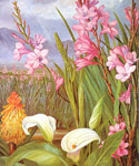 North Beauties of the Swamps by  Marianne North (Painting ID: LA-3254-KA)