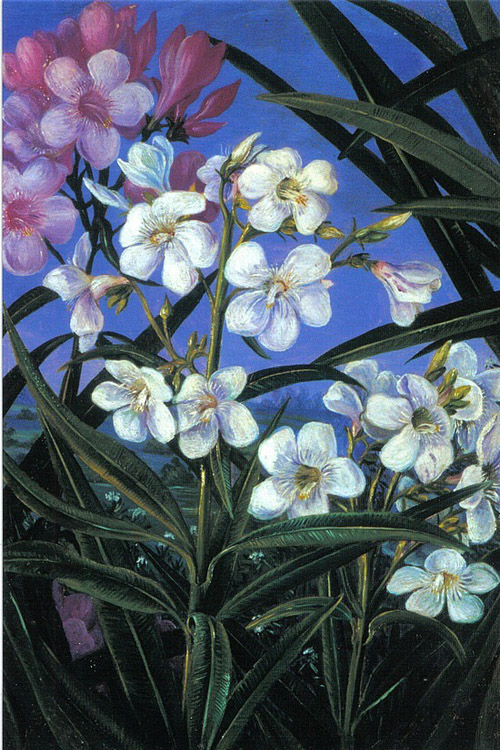 """Oleander"" by  Marianne North"