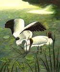Pelicans  (Painting ID: AN-1075-KA)
