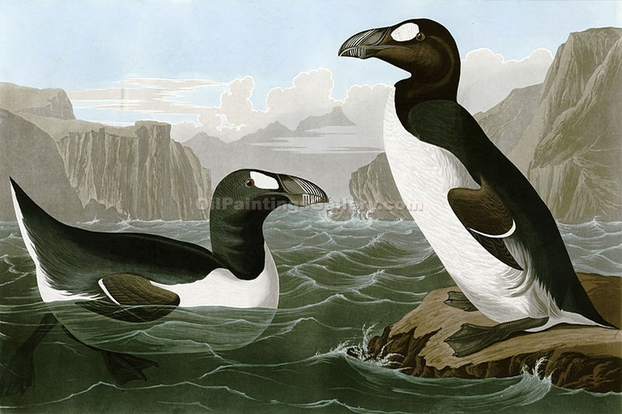 Pinguinus Impennus by John James Audubon | Expressionism Paintings - Oil Paintings Gallery