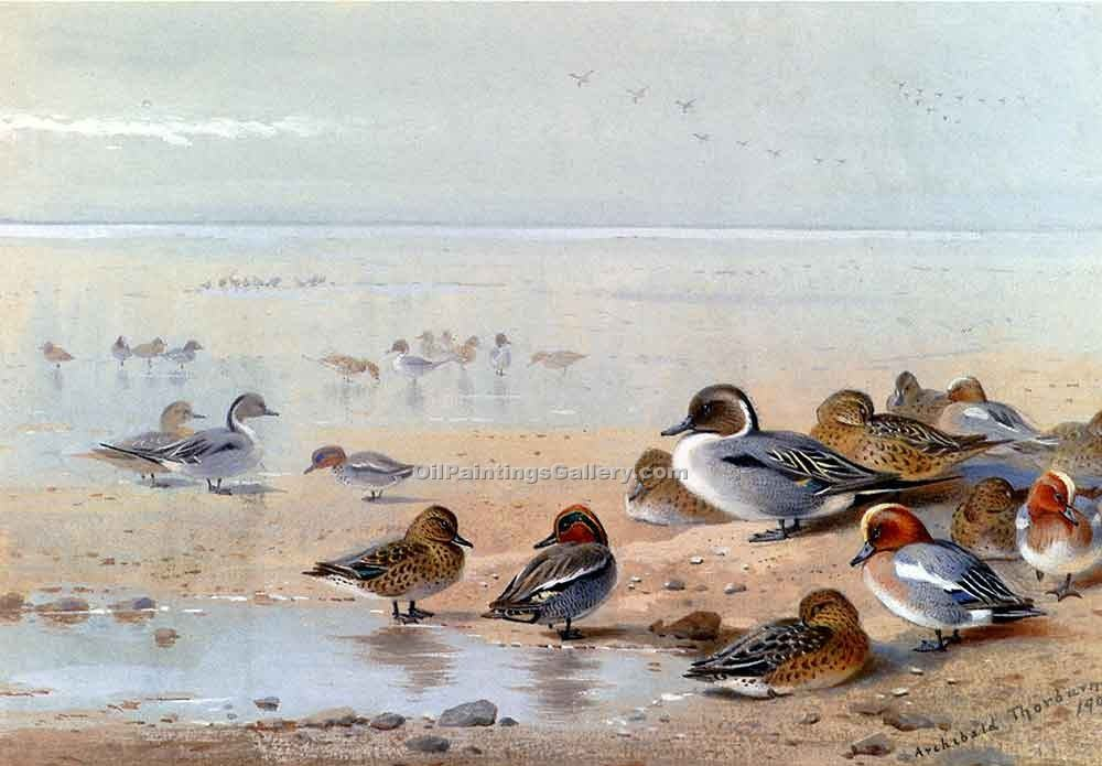 """Pintail Teal and Wigeon on the Seashore"" by  Archibald Thorburn"