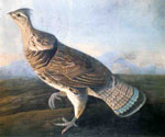 Ruffed Grouse by  John James Audubon (Painting ID: AN-0868-KA)