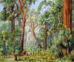 Scene in a West Australian Forest by  Marianne North (Painting ID: LA-3264-KA)