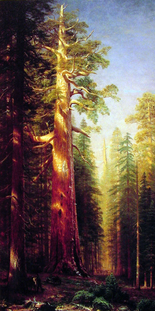 """The Great Trees, Mariposa Grove, California"" by  Albert Bierstadt"