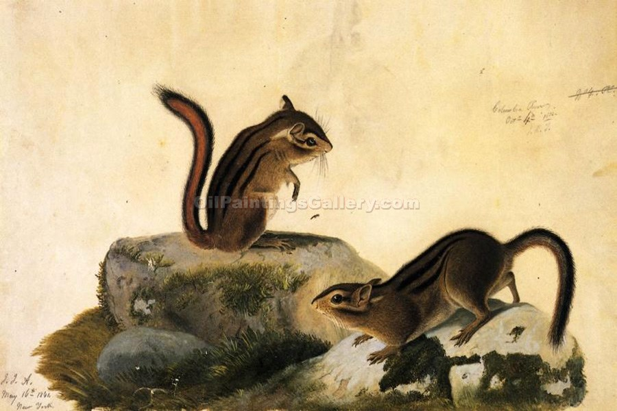 """Two Ground Squirrels"" by  John James Audubon"