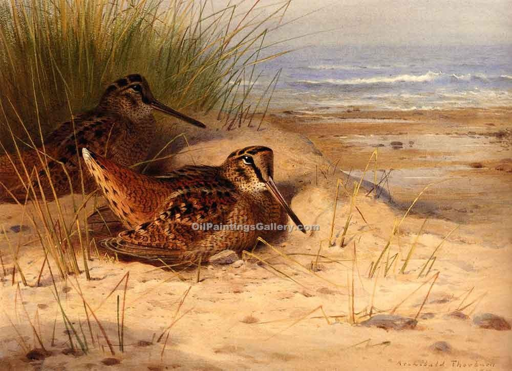 """Woodcock Nesting on a Beach"" by  Archibald Thorburn"